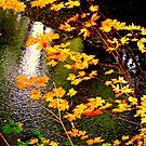 """Creekside Colors"" by Lynn Bawden"