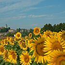 Bubbio watches the sunflowers by Karen Havenaar