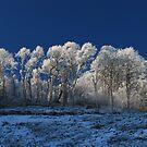 Hoar Frost by Alexander Mcrobbie-Munro