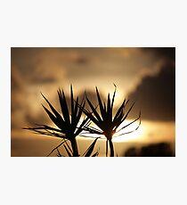 Peaceful Photographic Print