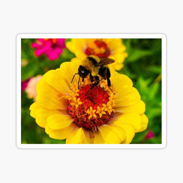 Busy Bee by Jerald Simon (Music Motivation - musicmotivation.com) Sticker