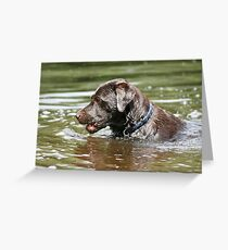 Loving the water Greeting Card