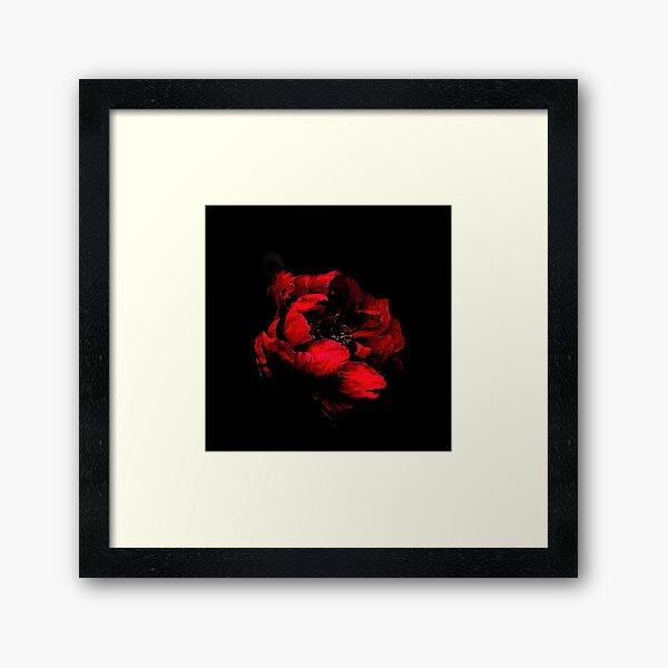 RED FLOWER ON BLACK BACKGROUND Framed Art Print