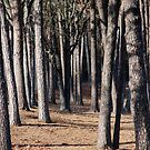 Tree Trunk Forest by Gordon Taylor