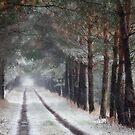 The Path Home by David Kuhn