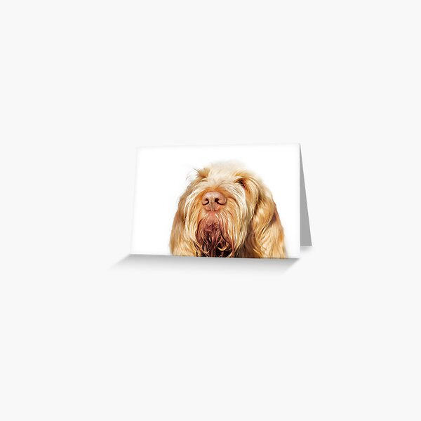 Waiting for you Spinone Greeting Card
