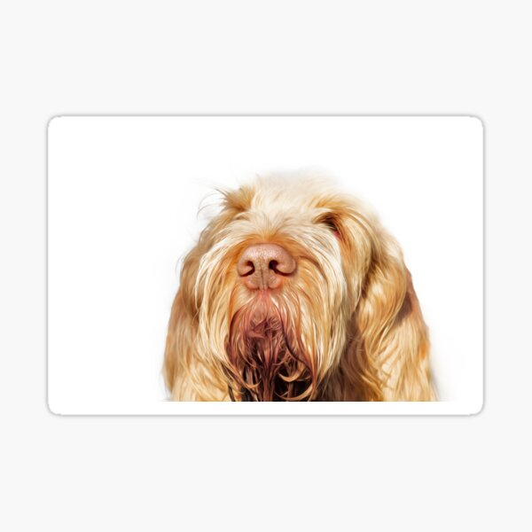 Waiting for you Spinone Sticker