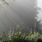 Morning Walk by Lachlan Kent