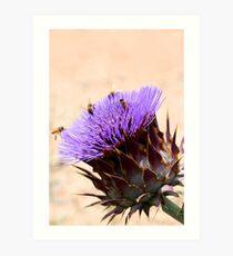 Bees on thistle Art Print