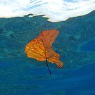 Leaf over Reef I by Reef Ecoimages