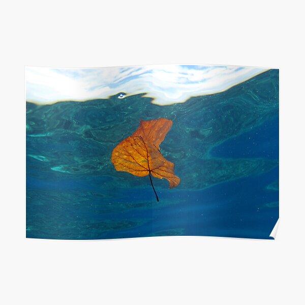 Leaf over Reef I Poster