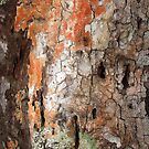Coconut bark at Skull Island by Reef Ecoimages