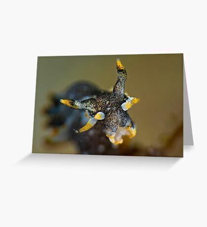 Polycerta Pose Greeting Card