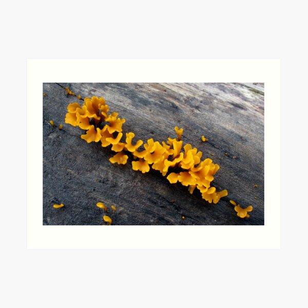 Fungi at Savo Island Art Print