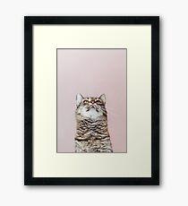 Beautiful cat looking up Framed Print