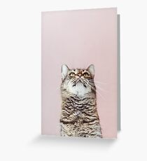 Beautiful cat looking up Greeting Card