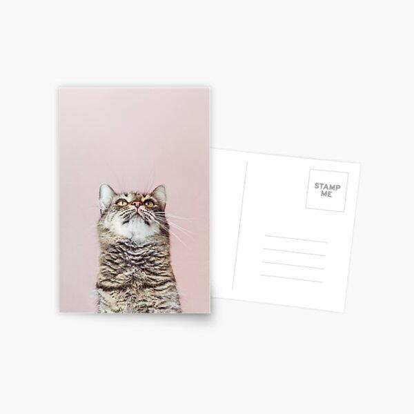 Beautiful cat looking up Postcard
