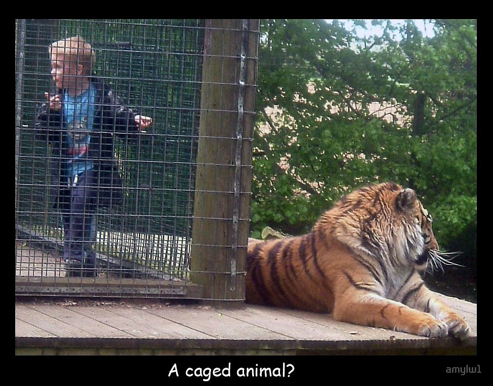 A caged animal? by amylw1