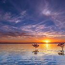 3 Trees @ Wello - Wellington Point Qld Australia by Beth  Wode