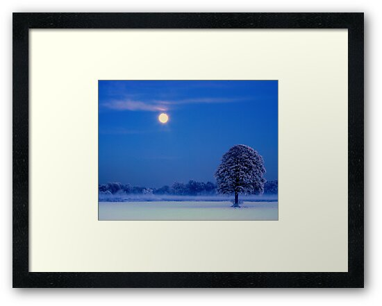 """""""MOON OVER THE OAK"""" by snapitnc"""