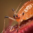 Aphid by Scott Carr