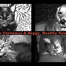 Christmas Wishes by PPPhotoArt