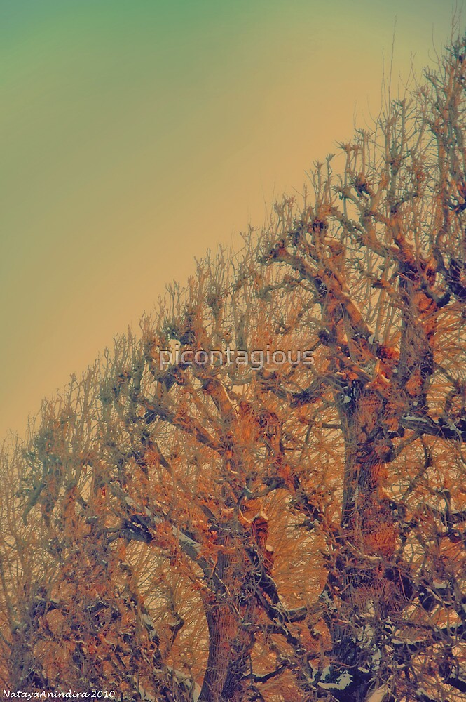 Winter composition 6 by picontagious