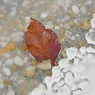 Icy Leaf by Sharon Woerner