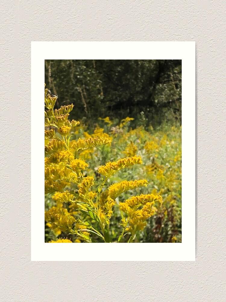 Alternate view of Yellow, Yellow flowers Art Print