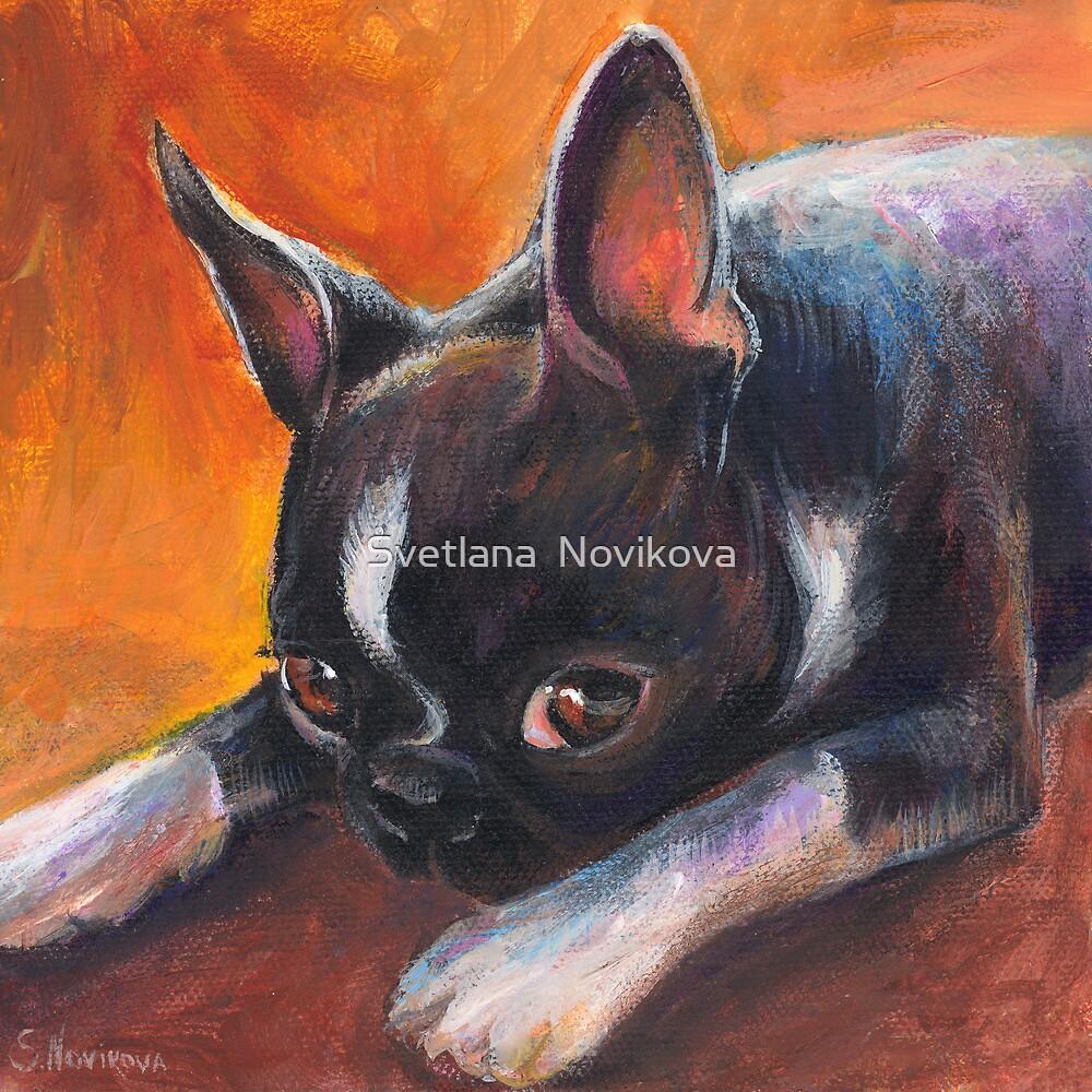 Whimsical Boston Terrier dog painting by Svetlana  Novikova