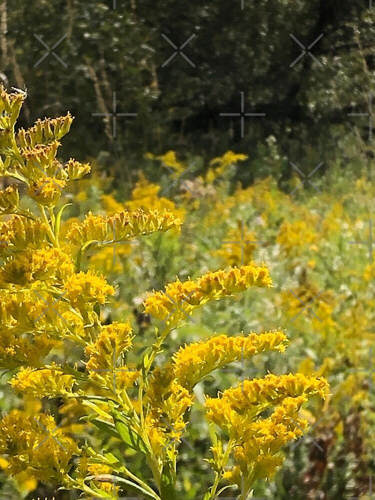 Yellow, Yellow flowers by PicsByMi