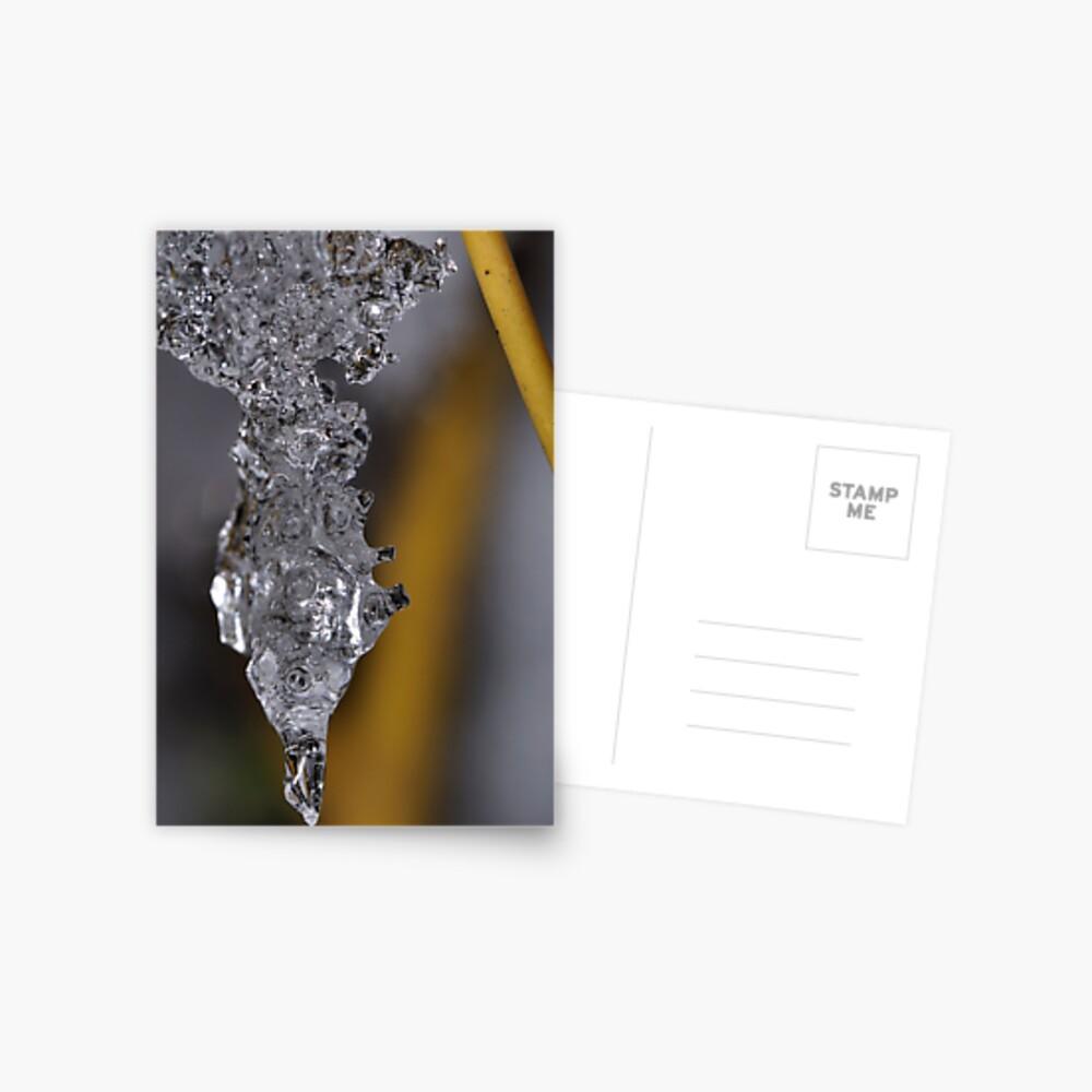 Ice Chrysalis Postcard