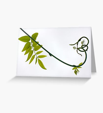 carnival wisteria Greeting Card