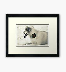 Broach for Christmas Framed Print
