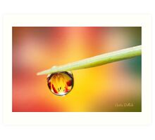 Daylily in a Droplet Art Print