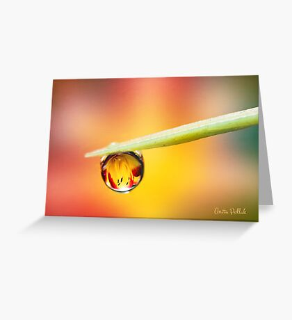 Daylily in a Droplet Greeting Card