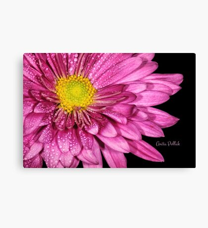 Droplets on a Pink Dahlia Canvas Print