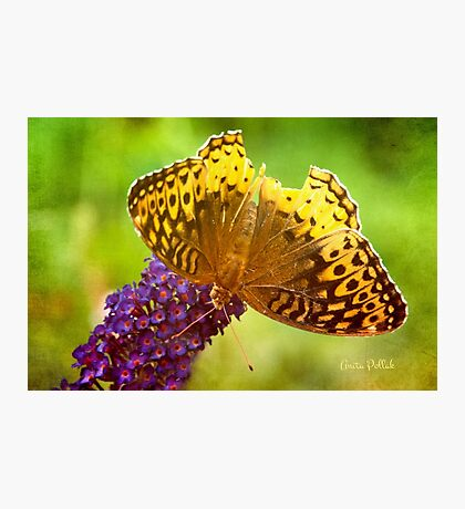 But I Can Still Fly! Photographic Print