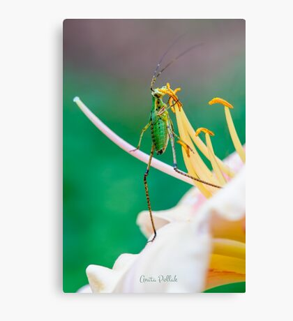 Waltz with a Flower  Canvas Print