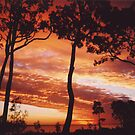 The Trees Sunset Silouette by Diamond8