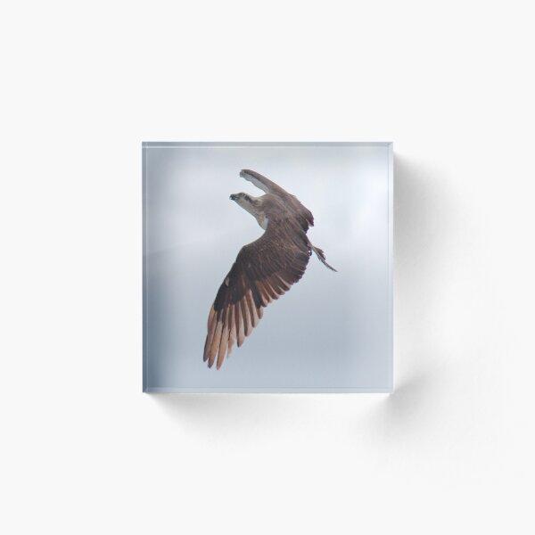 SC ~ WO ~ RAPTOR ~ Eastern Osprey by David Irwin 240919 Acrylic Block