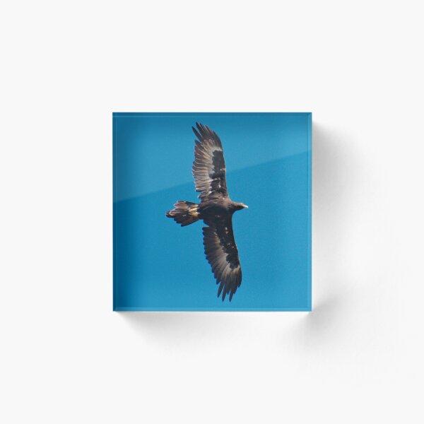 RAPTOR ~ Wedge-tailed Eagle X3337VZU by David Irwin 240919 Acrylic Block