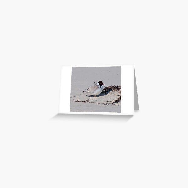 SHOREBIRD ~ Hooded Plover by David Irwin 240919 Greeting Card