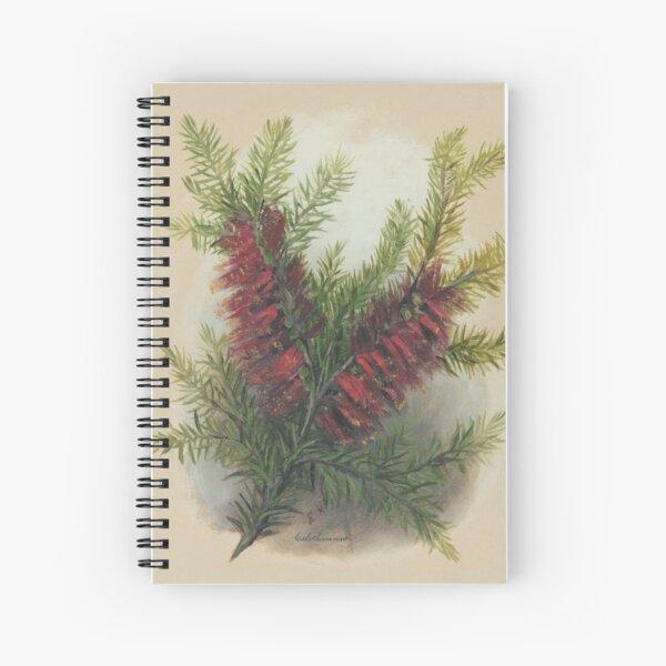 Western Australia wild flower One-sided Bottlebrush- Calothamnus State Library of Western Australia Spiral Notebook
