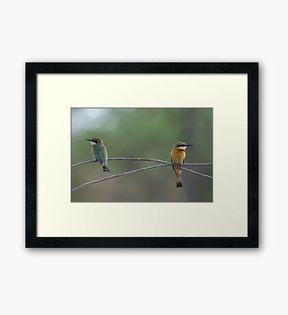 Little Bee-eaters Framed Print