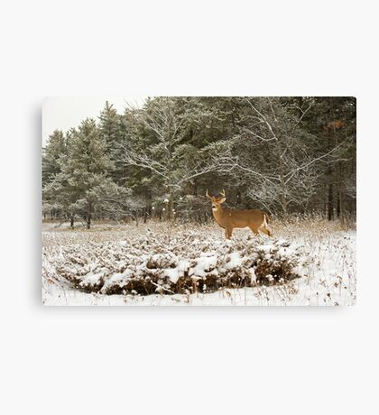 Wounded Buck  Canvas Print