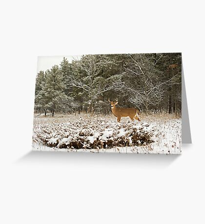 Wounded Buck  Greeting Card