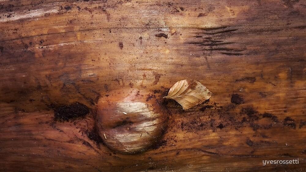 wood life by yvesrossetti