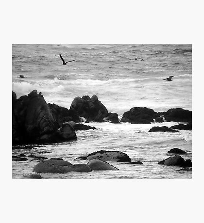 swim in the breeze off the rocky shore Photographic Print
