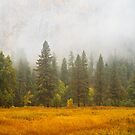 Fall in Yosemite by Nickolay Stanev